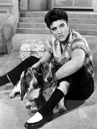 Elvis-with-hound-dogs-in-JRock-elvis-presley-8686373-338-450